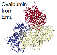 structure of ovalbumin