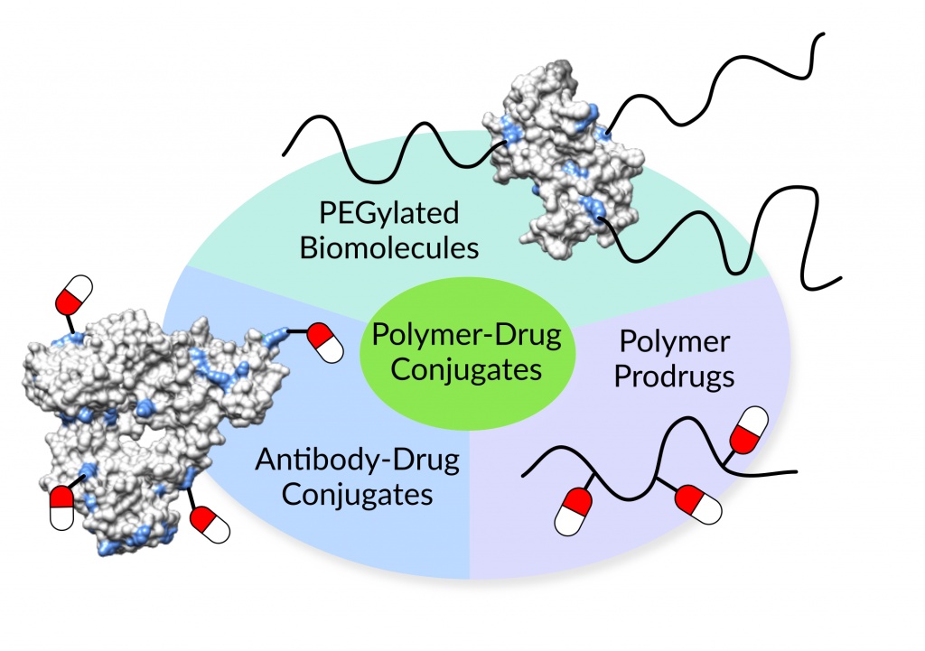 Polymer-drug conjugates include polymer prodrugs, PEGylated biomolecules, and antibody-drug conjugates
